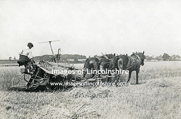 Ashby_cum_Fenby_Harvesting_Oats