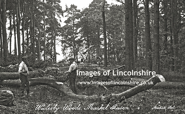Tree_Felling_in_Walesby_Woods