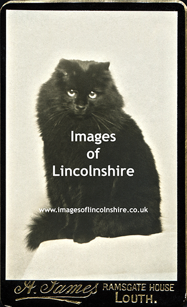 Black_Persian_Cat_by_James_of_Louth