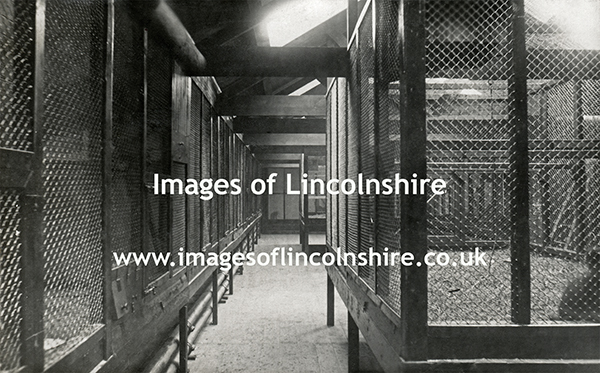 Cages_at_Beechfield_Zoo_Grimsby_c1930s