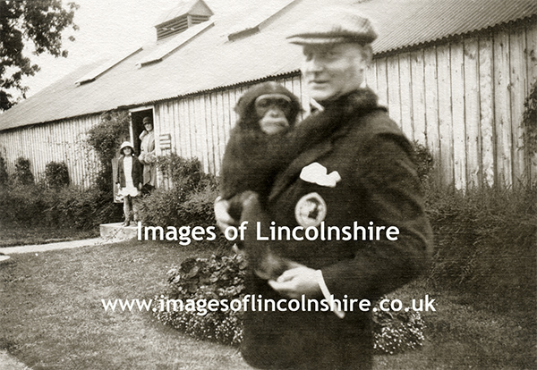 Chimpanzee_with_Keeper_Beechfield_Zoo_Grimsby_c1930s