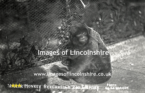 N_Monkey_at_Beechfield_Zoo_Grimsby_c1930s