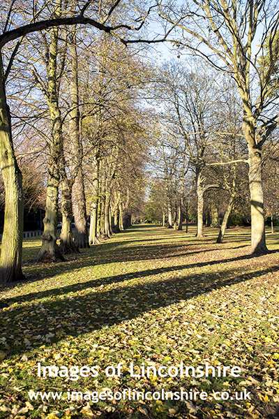 Avenue_of_Trees_Peoples_Park_Grimsby