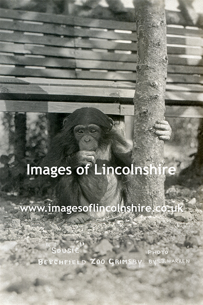 Sousie_Beechfield_Zoo_Grimsby_c1930s